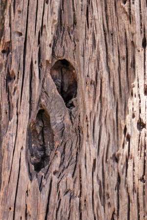Old rotten wood of tree. Nature wood for texture and background. Stockfoto