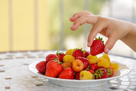 child hand taking bio yellow raspberries and red strawberries. close up Фото со стока