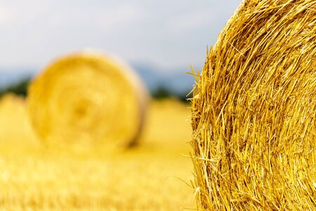 Straw bales on the field. After harvesting the grain in the summer