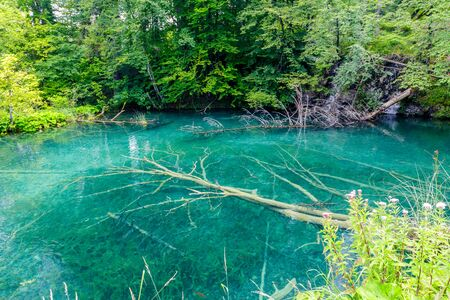Beautiful view of blue lake in summer afternoon in Plitvice national park in Croatia with flooded tree trunks.