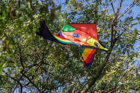 Brightly colored kite trapped in a tree crown. Color kite accident