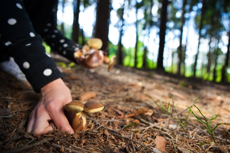 fall mushroom: Woman picking mushrooms in the forest