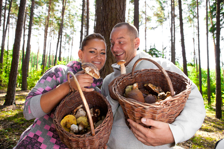 Couple picking mushrooms in the forest Stock Photo - 23764965