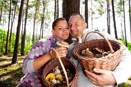 Couple picking mushrooms in the forest Stock Photo - 23764975