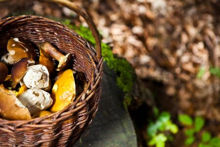 full basket of mushrooms photographed in a forest