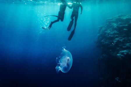 depth: Freediver in wetsuit neoprene swim in the sea