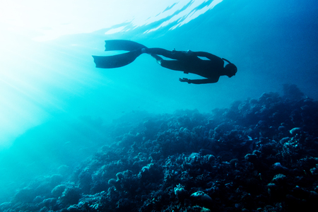 freediver: Freediver in wetsuit neoprene swim in the sea