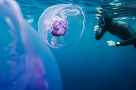 freediver: Freediver in wetsuit neoprene swim in the sea with jellyfish Stock Photo