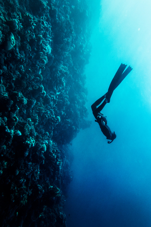 free diving: Freediver in wetsuit neoprene swim in the sea