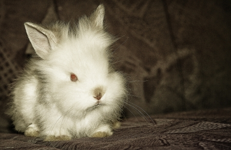 white rabbit pet photo