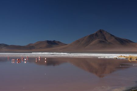 lipez: Laguna Colorada flamingos and Sud Lipez landscape