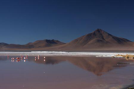 sud: Laguna Colorada flamingos and Sud Lipez landscape