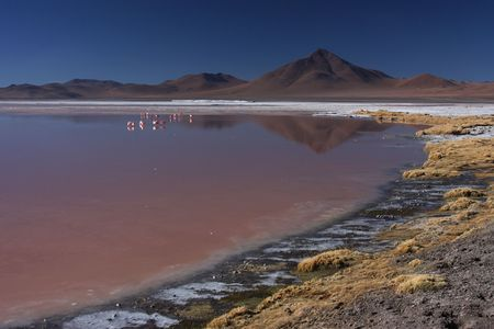 sud: Laguna Colorada on the Sud Lipez Altiplano  Stock Photo