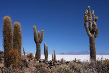 salar de uyuni: Salar de Uyuni in Sud Lipez Altiplano