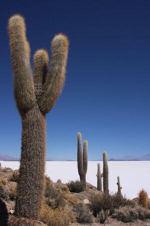 salar: Salar de Uyuni in Sud Lipez Altiplano