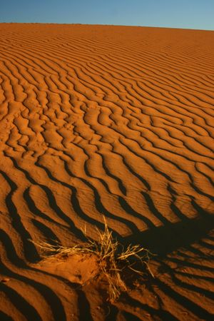 Waves in the sand of Sahara photo