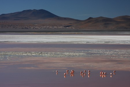 lipez: Laguna Colorada flamingos on the Sud Lipez Altiplano  Stock Photo