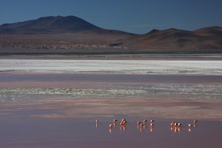 sud: Laguna Colorada flamingos on the Sud Lipez Altiplano  Stock Photo