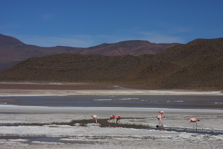 lipez: Laguna on the Road of Jewels in Sud Lipez Altiplano