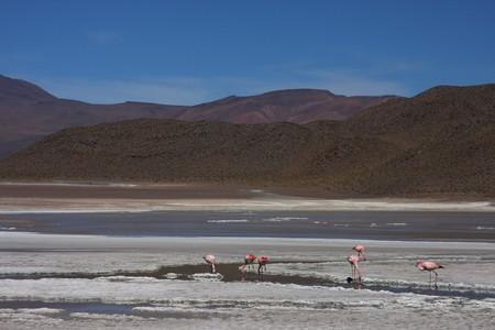 lipez: Laguna on the Road of Jewels in Sud Lipez Altiplano