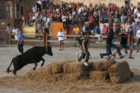 AIGUES-MORTES, FRANCE - OCTOBER 7 - Young people playing with a bull under the fortress, in October 7, 2012 in Aigues-Mortes, France. Indigenous genre of bullfighting is common in Languedoc, and is known as course camarguaise