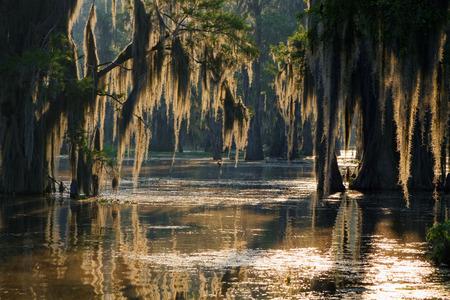 marshland: Spanish moss in the Louisiana Bayou Stock Photo