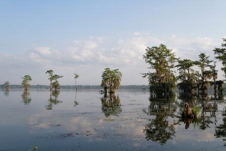 bayou swamp: Morning light in the Bayous of Louisiana Stock Photo