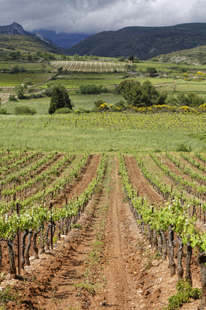 to tend: Corbieres Vineyard. The wines from the region tend to be just as varied as the terroir