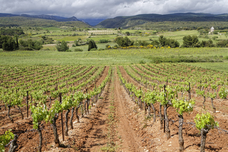 terroir: Corbieres Vineyard. The wines from the region tend to be just as varied as the terroir