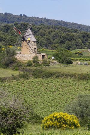 terroir: Old windmill in a vineyard landscape