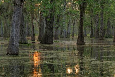 De zon komt op Bayou van Louisiana. Meer Martin, in St. Martin Parish, is een wildreservaat en een van Louisiana moerasgebieden.