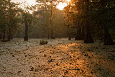 wildlife preserve: LAKE MARTIN, LOUISIANA, May 3, 2015 : The sun rises on Bayou of Louisiana. Lake Martin, in St. Martin Parish, is a wildlife preserve and one of Louisiana swamplands.