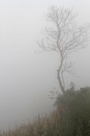 thru: Tree thru the fog