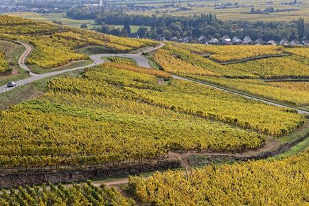 The Route des Vins (Wines Route) winds between vineyards of Alsace Stock Photo