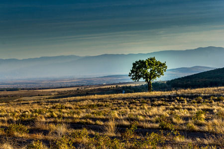 lonely tree: Lonely tree on the background of mountains Stock Photo