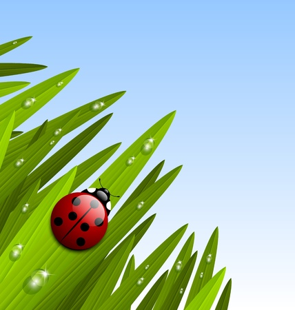 Morning grass with ladybug and copy space for your custom text Stock Vector - 12925398