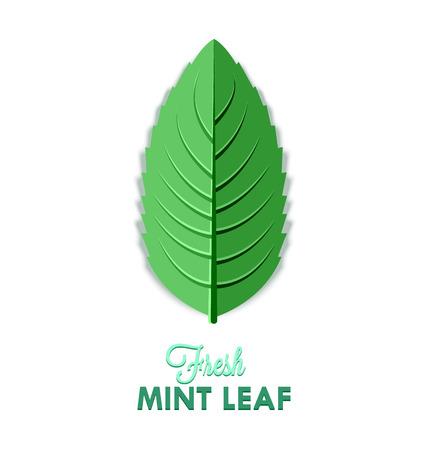 Fresh mint leaf isolated on white background Çizim