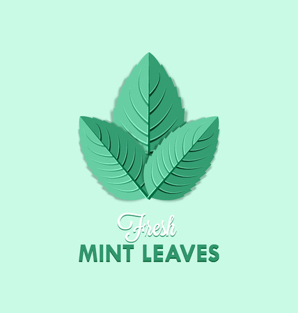 flavor: Fresh mint leaves isolated on pale green background Illustration