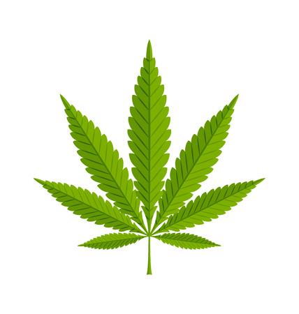 마리화나 대마 (대마초 sativa 또는 대마초 indica의) 흰색 배경에 잎 일러스트
