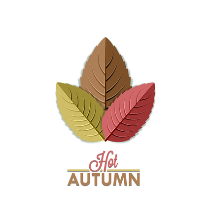 on a white background: Three colorful autumn leaves placed on white background