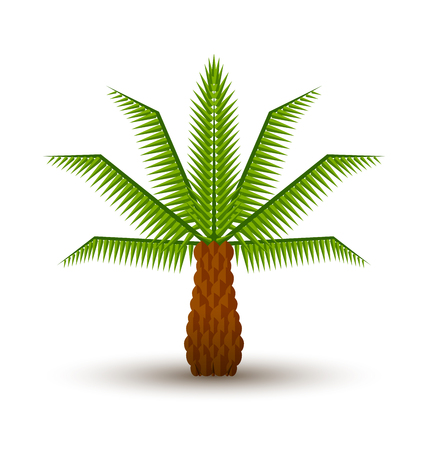 drawing trees: Palm tree icon isolated on white background