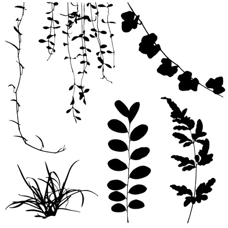 set black silhouettes of leaf and vine plant Vector illustration