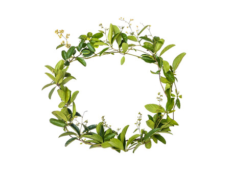 wreath of creeper flower isolated on white background