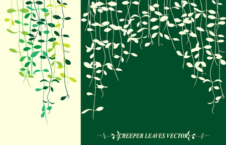 creeper: Isolated tropical creeper leaves vector for spring background