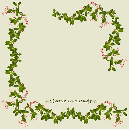 hojas parra: Frontera de la flor de enredadera planta de vid ilustraci�n vectorial Vectores