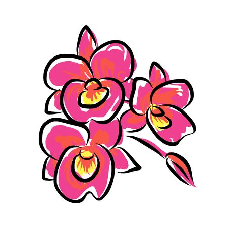 pink orchid: Pink orchid painting isolated on white, abstract flower, vector