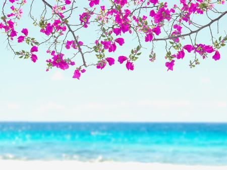 bordes decorativos: Bougainvillea flor rosa sobre fondo de la playa de desenfocado