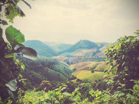 tropical leaves: wild leaves creeper plant over colorful mountain background, vintage filter effect