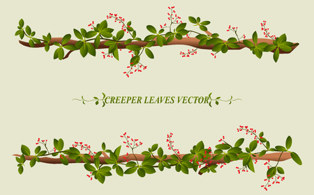 vines: Border of creeper flower vine plant illustration