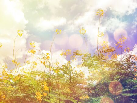 retro flowers: Look up to yellow peacock flowers over blue sky, soft focus with vintage filter effect Stock Photo